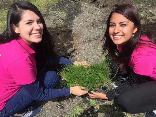 Reforestación - Team Building, Integración